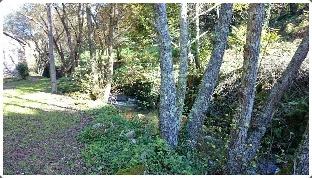Río Sarela a escasos metros