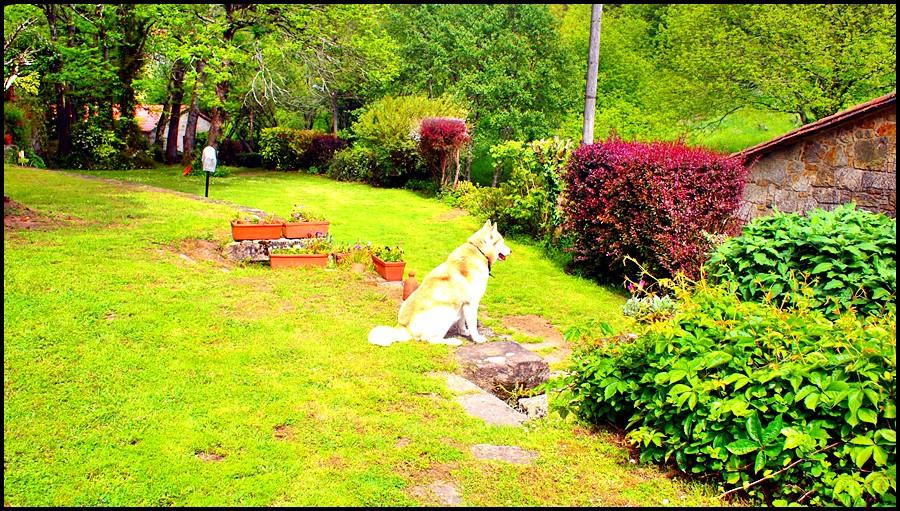 Jardín - Acepta animales