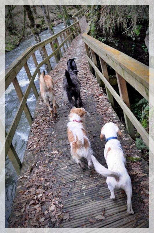 4374d9616d31d Casas Rurales Galicia admiten Perros y animales