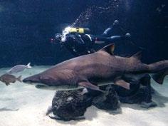 Aquarium Fisterrae